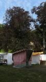 p1260950schlossfest_hainewalde_2013