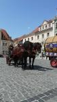 p1270218-loeber-bierwagenziehen-2013_02