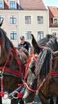 p1270224-loeber-bierwagenziehen-2013_02