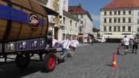 p1270353-loeber-bierwagenziehen-2013_02